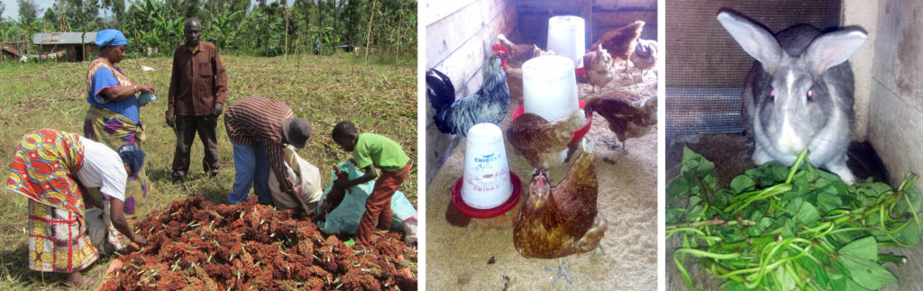 Agriculture et élevage continuent